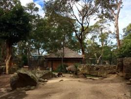 So an ema, a kangaroo and a weird looking bird walk into a bar...