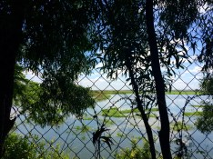 The Choeung Ek was initially an orchard, and you can still see many trees and ponds