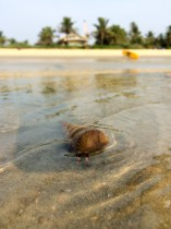 With some luck you'll also be able to see one of these shy hermit crabs