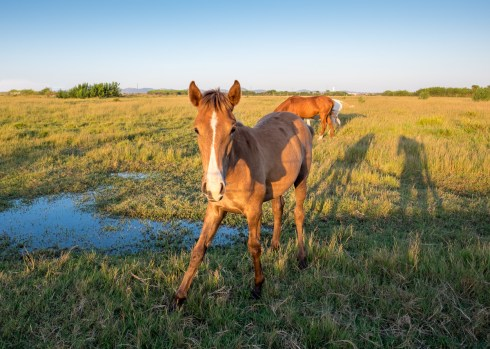 Young horse at Almograve, Portugal (16mm, 1/140s, f5.6, ISO 200)