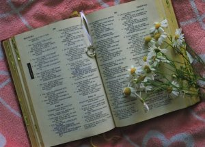 Bible w daisies
