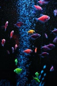 Multi color fish in aquarium