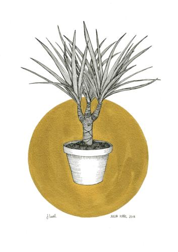 Plant Opulence 1