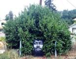 bush'fro