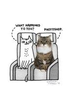 photoshopped cat