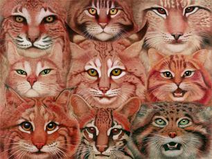 Tiffany Bozic 2013 Felidae