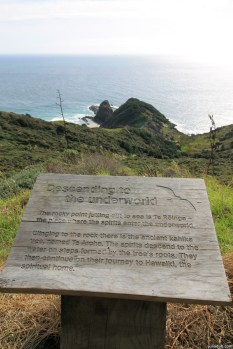 """""""The rocky point jutting out to sea is Te Reinga the place where the spirits enter the underworld. Clinging to the rock there is the ancient kahika tree, named Te Aroha. The spirits descend to the water on steps formed by the trees roots. They then continue on their journey to Hawaiki, the spiritual home."""" Cape Reinga"""