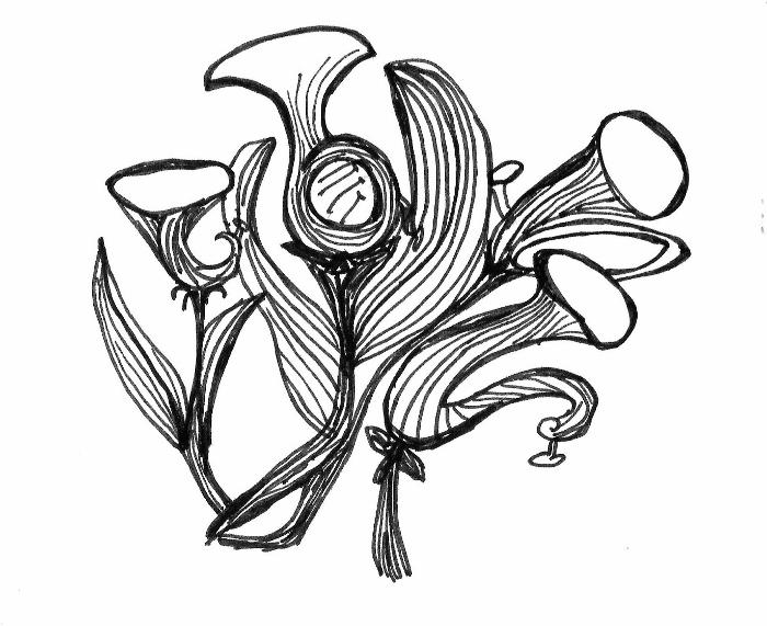 Grafiken/Zeichnungen/dessins