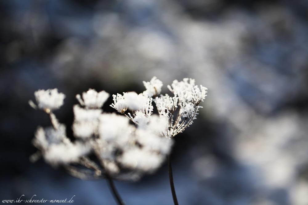 winterbilder  Ihr schnster Moment  Julia Hartel Fotografie Blog