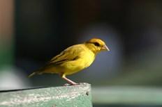 Aves 8