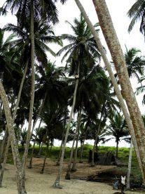 Kinder beim Palmenklettern