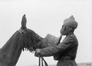 Brtisih Indian Army, Sikh soldier and his mule - gas masks 1939