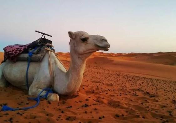 Morocco desert