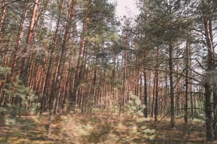 visit Chernobyl nuclear plant pripyat red forest
