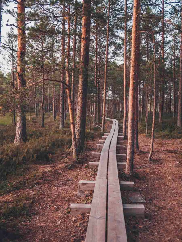 things to do in tallinn, estonia and around it viru bog lahemaa national park