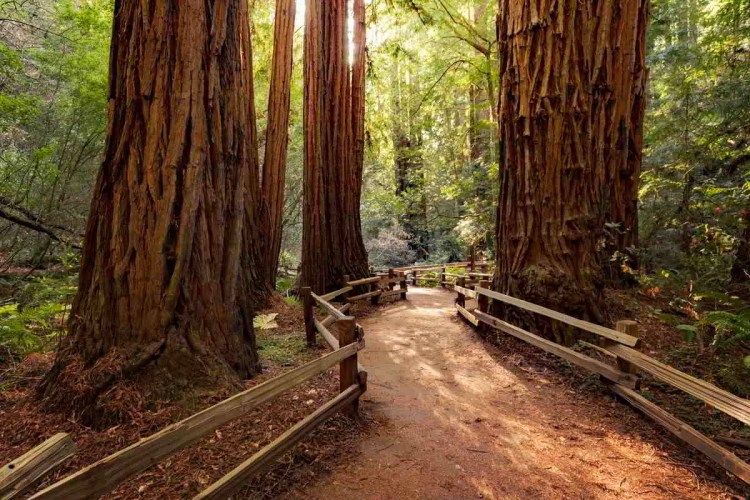 26 Redwood National Park, California Best places to visit in September in the USA