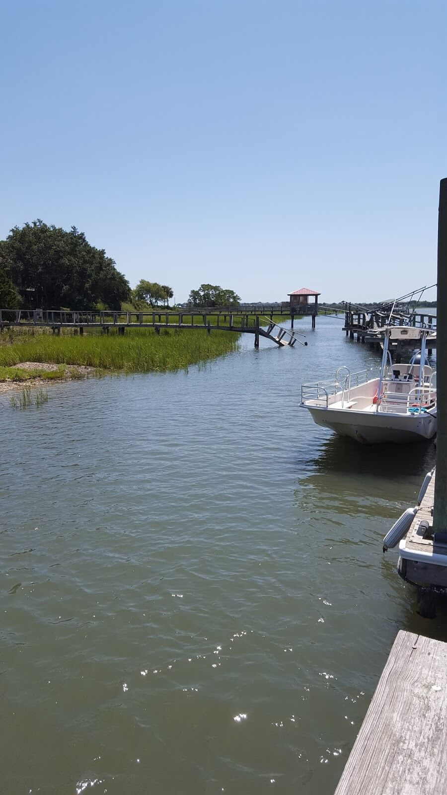 Charleston outdoor adventures - dolphin tour