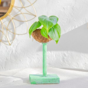 DIY Kokosnuss Blumentopf - upcycling idee Kokosnuss Blumentopf basteln - diy für pflanzen (2)
