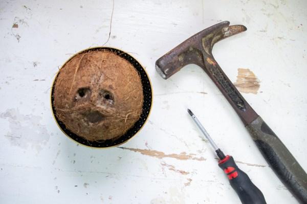 blumenampel anleitung diy blumenampel selber basteln aus kokosnussschale, basteln mit kokosnussschale, kokosnussschale ideen diy geschenk ideen (1)