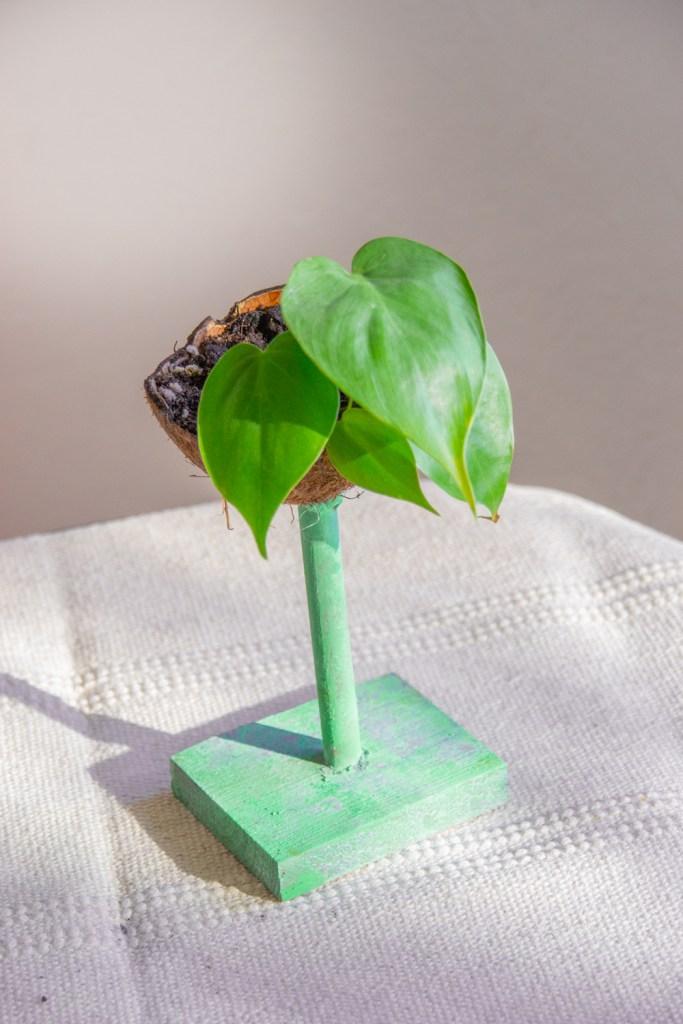 Diy Kokosnuss Blumentopf Upcycling Trend Mit Kokosnussschale