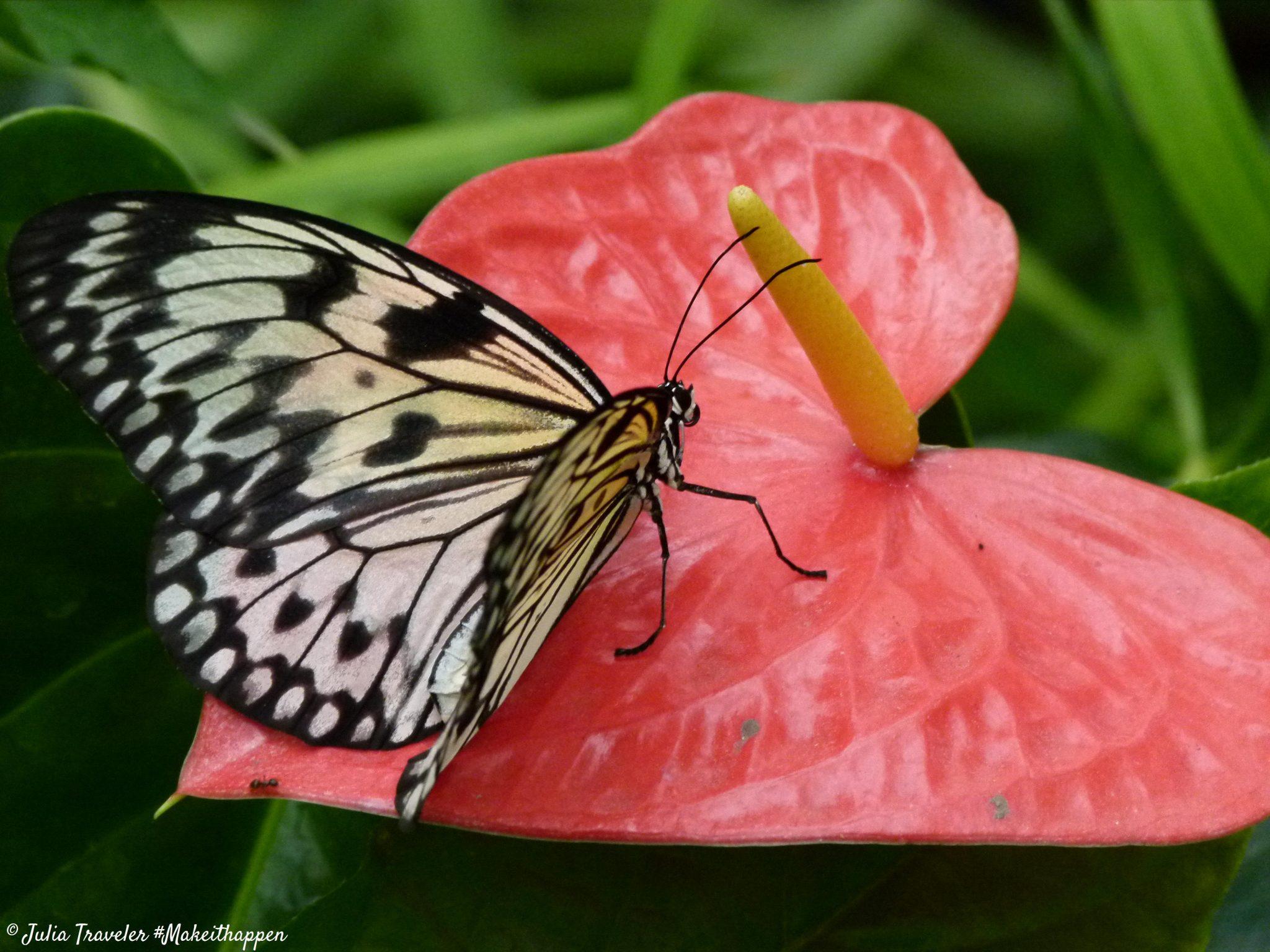 Serre aux papillons (18)