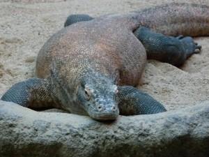 Zoo Prague