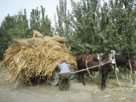 by the side of the road, uzbekistan