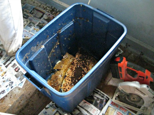 tools hive removal