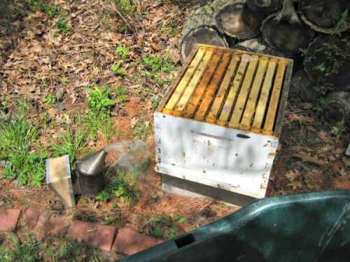 deep brood box early in the season with smoker beekeeping juliecache