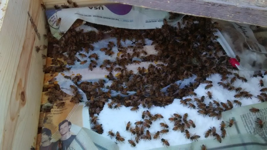 honey bees, winter care