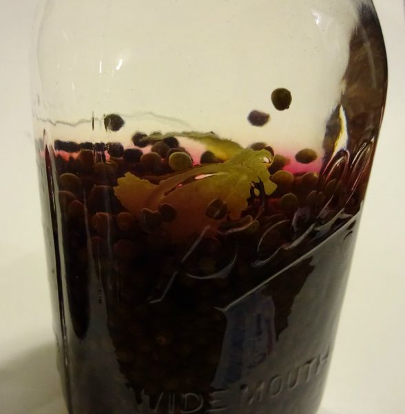 elderberries, vodka, lemon peel