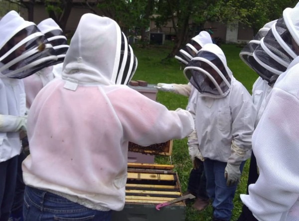 bee club members inspecting a hive