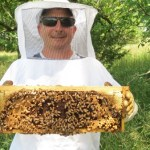 jeff holding a frame of bees