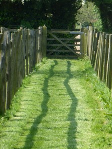a real treat: a lawned and mown footpath!