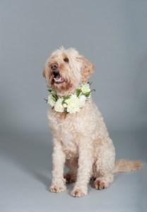 dog_wearing_flower_collar