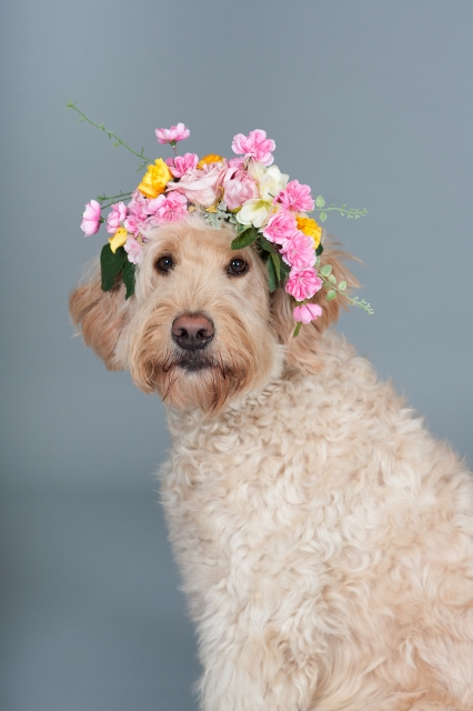 dog_wearing_flower_crown