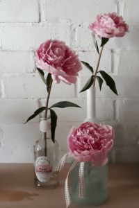 how to look after peonies