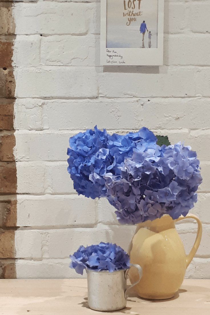 looking after hydrangea