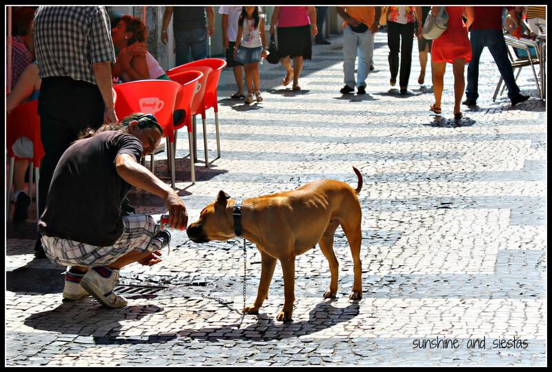 dog drinking coke