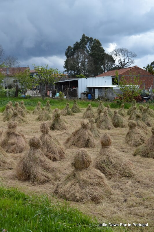 Haystacks near Barcelos, Portugal. On the Way of St. James