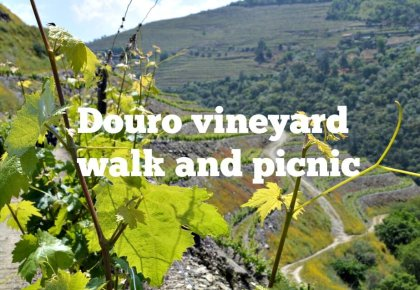 Douro vineyard walk and picnic