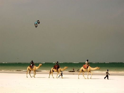 camels and kiting dark sky