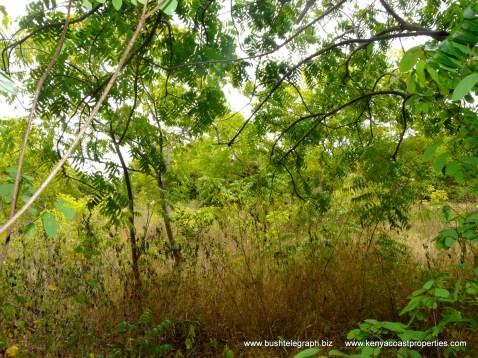 Kilifi Creek plot4