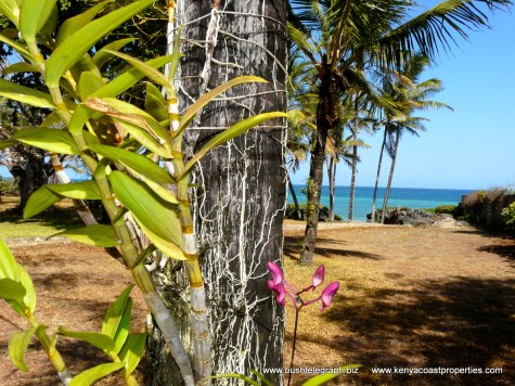 orchid to sea
