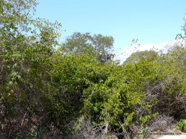 diani-beach-plot2