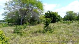 kilifi-plot-in-plantations