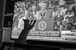 Munchkin Kitty jumps on TV screen.