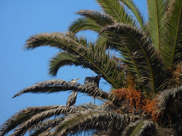 Bolsa Chica Ecological Reserve 3