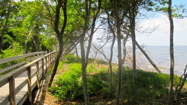 sunken forest 7