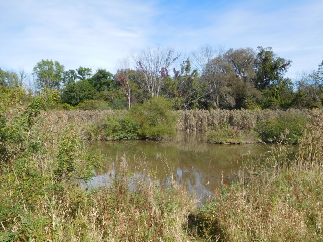 montezuma national wildlife refuge 25